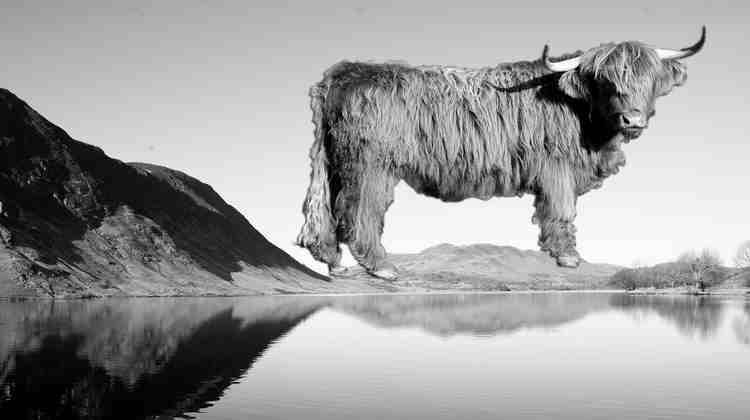 Bull on mountains
